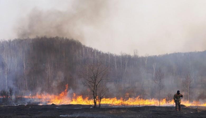 Площадь лесных пожаров в Сибири увеличилась втрое
