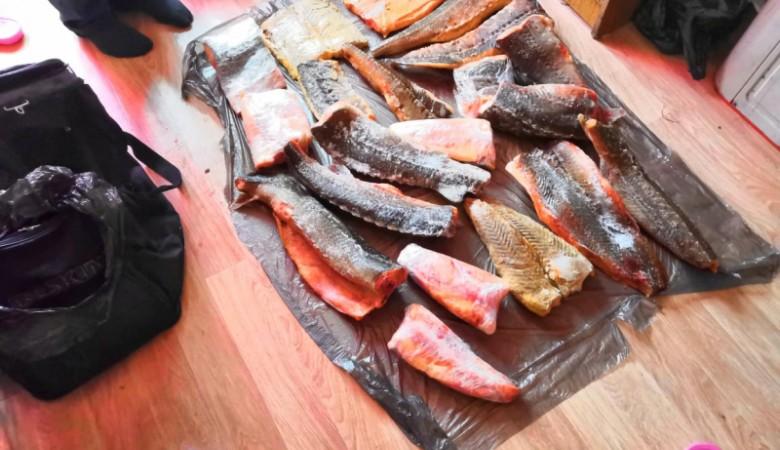 Браконьер наловил рыбы на 2 млн рублей в Красноярском крае