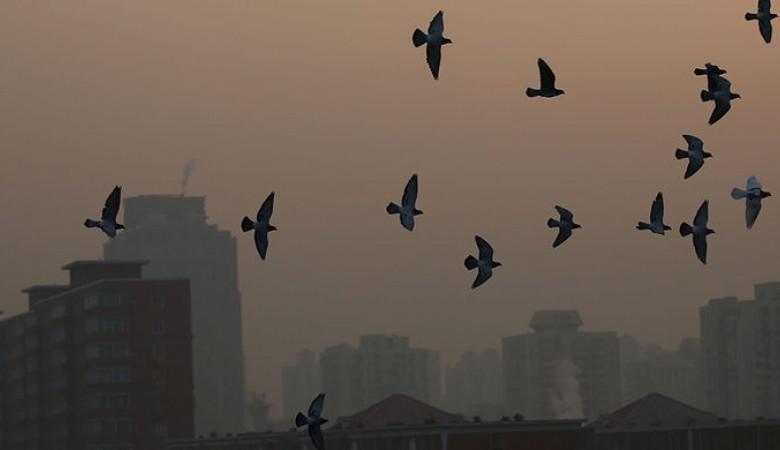 Роспотребнадзор предупредил туристов о вспышке сибирской язвы в Китае