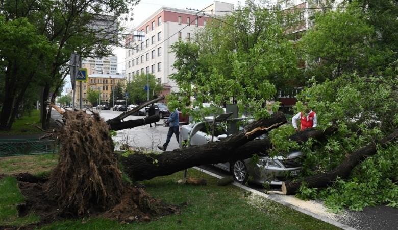 На Алтае ураган повалил деревья и сорвал крыши домов