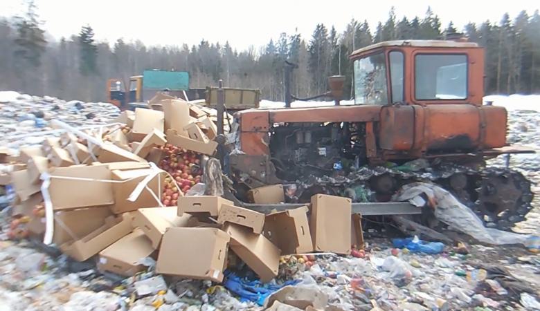 В Чите трактором раздавили 95 кг польских яблок
