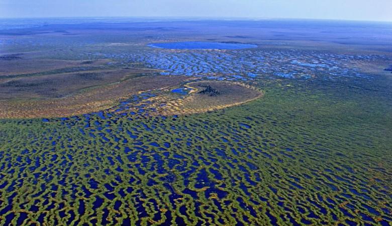 Кабмин утвердил создание заповедника на Большом Васюганском болоте