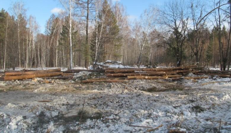 Житель Красноярского края незаконно вырубил лес на 9 млн руб