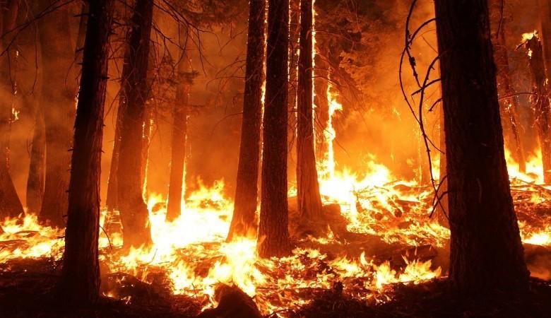 В Омской области ввели режим ЧС из-за пожаров в лесах Тевризского района