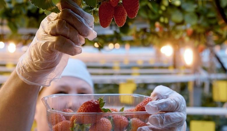 Российскими ягодами, орехами и грибами теперь будут торговать на бирже