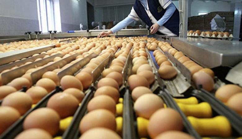 Китай хочет поставлять в Россию яйца и цыплят