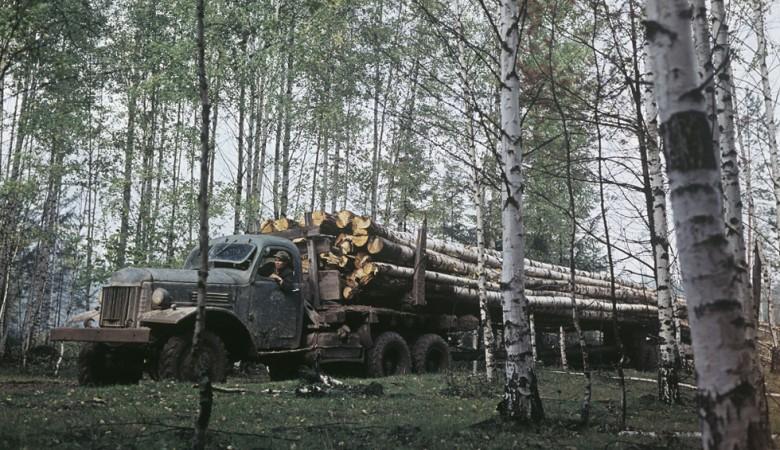 Путин не связывает паводок в Иркутской области со взрывными работами, но видит одной из причин массовые вырубки леса