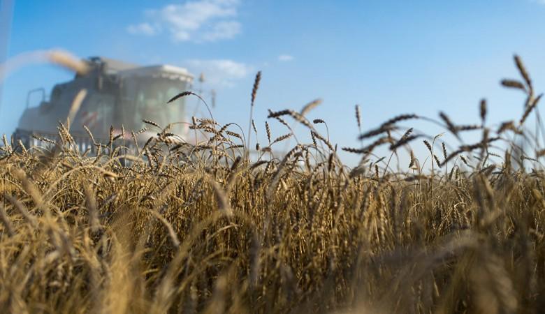Режим ЧС введен в Забайкалье из-за засухи