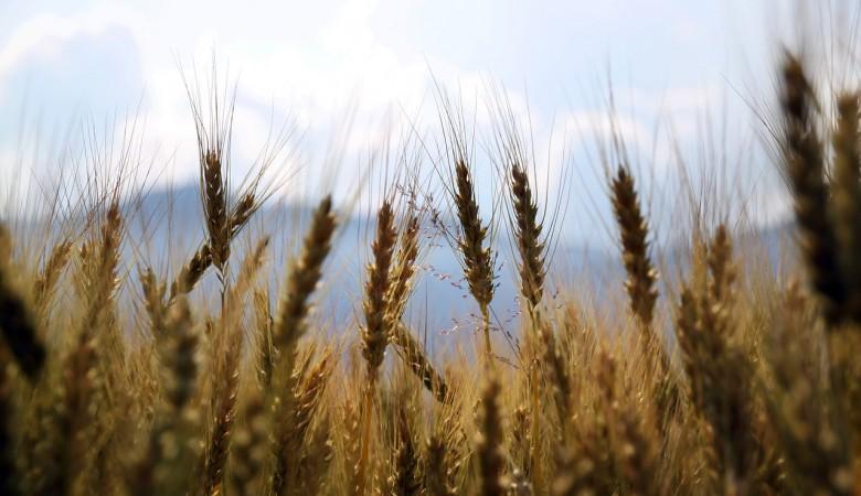 Иркутская область рассчитывает в 2019г увеличить экспорт продовольственных товаров на 19%