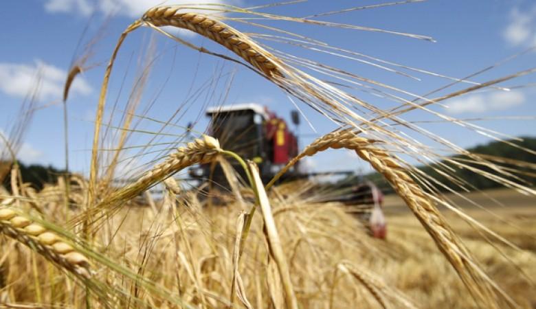 Красноярский губернатор обещает поддержать экспортеров зерна