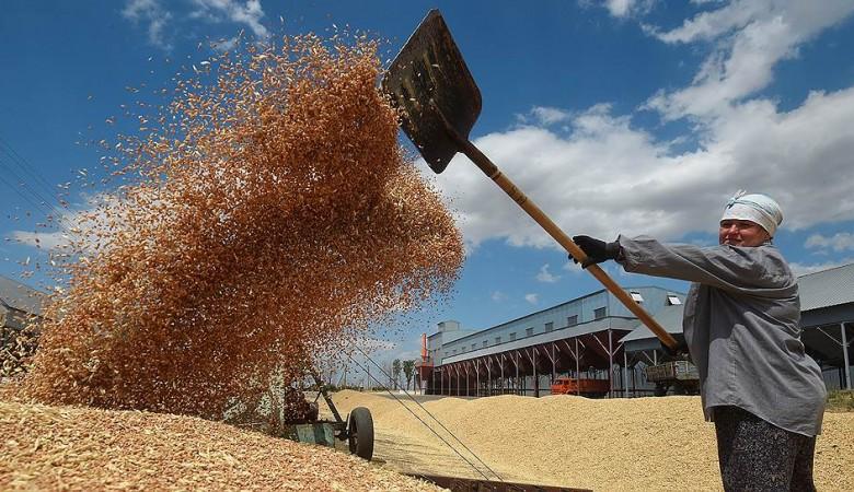 Новосибирская область прекратила стимулировать экспорт зерна
