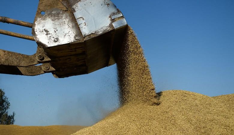 Амбарный жук испортил 12 тыс. тонн зерна, закупленного в рамках госинтервенций, во время хранения в Красноярском крае