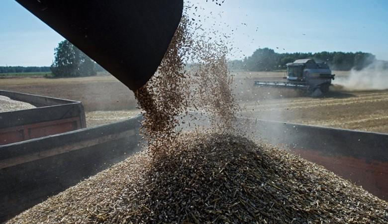 Урожай зерновых в Новосибирской области составил 2,7 млн тонн