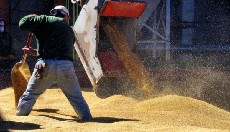 Минсельхоз ожидает роста цен на зерно в Сибири, несмотря на высокий урожай на Алтае