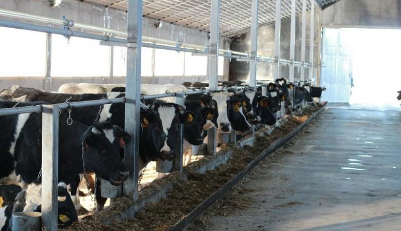 В Кузбассе началось строительство агрокомплекса за 10 млрд рублей