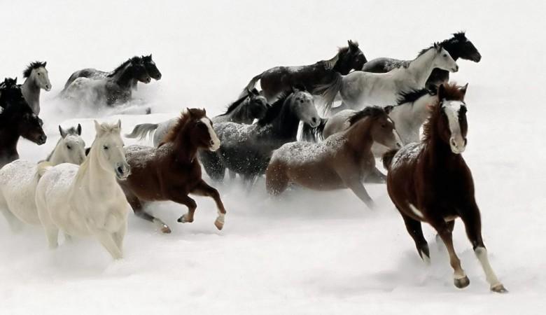 Табун сбитых лошадей нашел забайкалец натрассе «Амур»