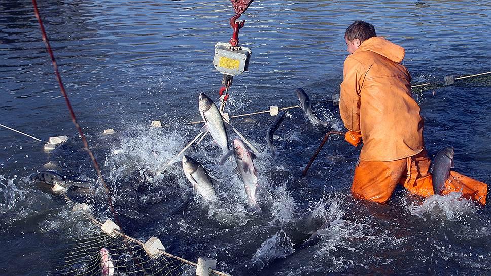 что будет если незаконно ловить рыбу