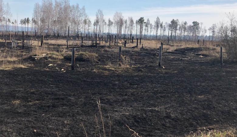 В Иркутской области зарегистрировали первый лесной пожар
