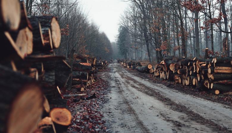 Красноярский край стал лидером России по числу незаконных рубок леса, Прибайкалье - второе