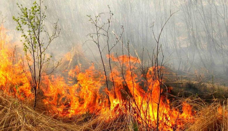 В Алтайском крае продлили штормовое предупреждение из-за высокой пожароопасности