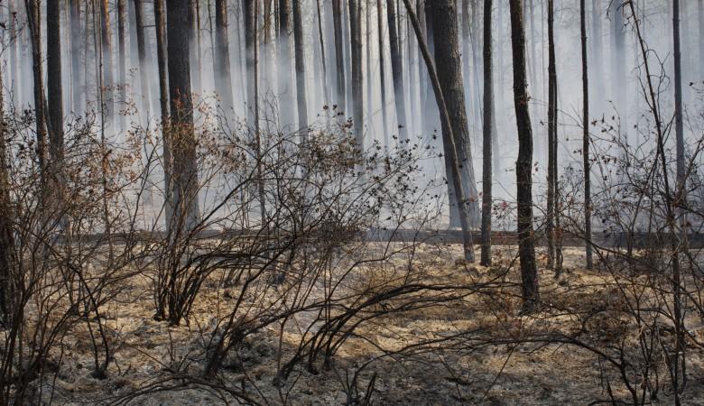 Площадь лесных пожаров в Иркутской области за сутки выросла в 2,7 раза