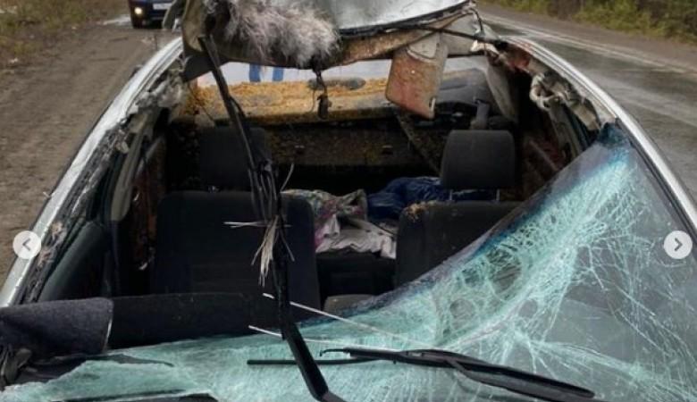 Лось выскочил перед «легковушкой» в Красноярском крае и погиб