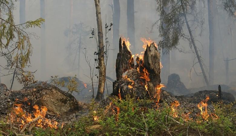 В Красноярском крае за выходные ликвидировано 55 лесных пожаров