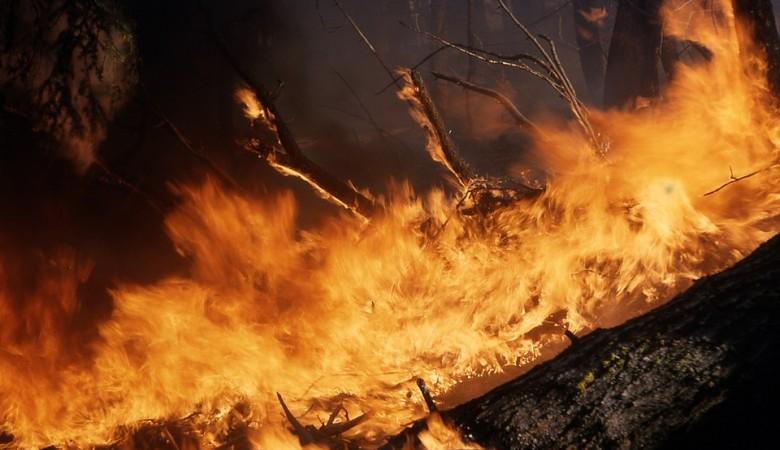 В Сибири предложили скидывать бомбы на горящие леса