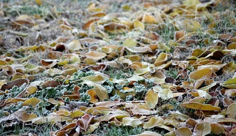 Иркутскую и Томскую области ожидают заморозки в ближайшие дни - Вильфанд